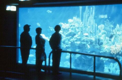 Aquarium Rock Installation
